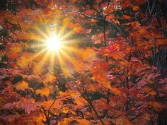 The sun shines through the fall foliage in Washington