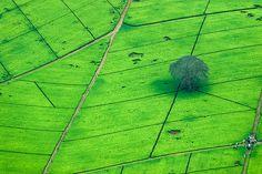 Tea plantation | da Yannick Garcin