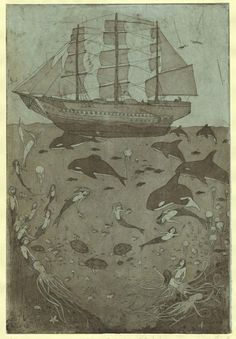 ship and sea life