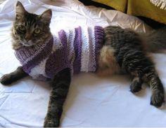 roupa de crochê para cães e gatos - Pesquisa Google