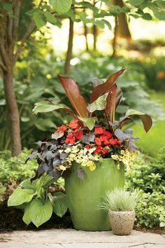 Shade Container Idea (Red Banana, Black Heart Sweet Potato, NG Impatiens, and Troy's Gold)