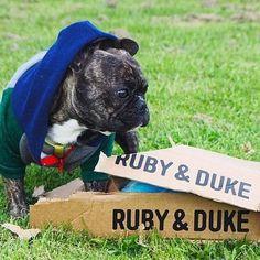 One of our many happy Ruby & Duke #Dukebox dog toy and treat customers. www.rubyandduke.com  #dogsofinstagram #dogstagram #dogs #dogsrule #doglove #doglovers #doglife #dogoftheday #doggy #doglover #doggie #dogscorner #dogofinstagram #dogsofinsta #dogwalk #dog_features #doggies #dogsandpals #dogloversofinstagram #dogdays #dogsofinstaworld #dogcrushdaily #dogslover Bow Wow, Dog Walking, Dog Toys, Dog Life, Duke, French Bulldog, Dog Lovers, Puppies, Doggies