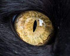 This collection of macro cat eye photography is by Andrew Marttila. He is a self-taught photographer and specializes in pet photography and is currently based in Fishtown, Pennsylvania. Fotografia Macro, Eye Photography, Animal Photography, Photo Oeil, Cat Club, Regard Animal, Gatos Cat, Photos Of Eyes, Pet Photographer