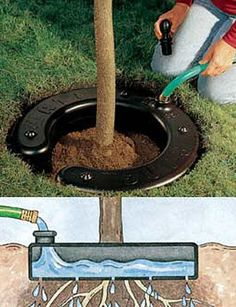 Water Ring - just be sure to remove at the end of every growing season to keep roots from growing into the ring.
