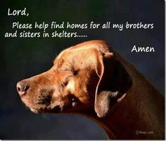 Please help me find homes for all my sisters and brothers