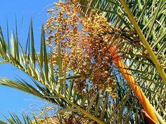 MSG ISLAM: Ces 10 aliments qu'aimait consommer le Prophète ﷺ