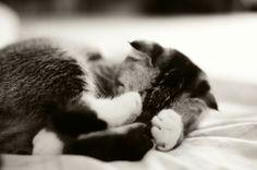 Sleeping kittie :3