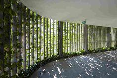 Тропический сад в отеле Naman Retreat