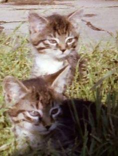 Oma Annas Katzenkinder