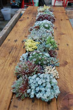 Outdoor succulent table