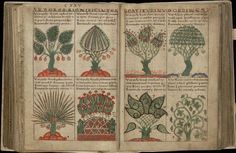 These images come from the fabled manuscript, 'Liber Floridus' (Book of Flowers), a Medieval encyclopædia produced some 900 years ago by Lambert, Canon of St Omer, in the NE France/Flanders/Belgium region. By peacay on Flickr