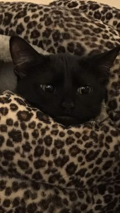 Her name is Ronda Meowsy. I Love Cats, Crazy Cats, Cool Cats, Pretty Cats, Beautiful Cats, Cute Baby Animals, Funny Animals, Kittens Cutest, Cats And Kittens