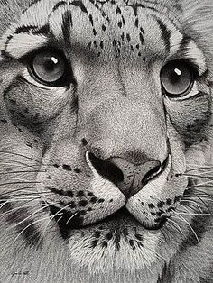 big cat art B&W photo SnowLeopard.jpg - big cat art B&W photo SnowLeopard.jpg big cat art B&W photo SnowLeopard. Big Cats Art, Cat Art, Art Scratchboard, Animal Drawings, Cool Drawings, Realistic Drawings Of Animals, Animal Pencil Drawings, Drawing Animals, Wildlife Art