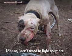 Ban Dog Fighting!