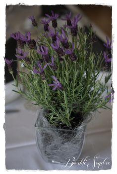 Bilderesultat for konfirmasjon lavendel Plants, Lavender, Plant, Planets