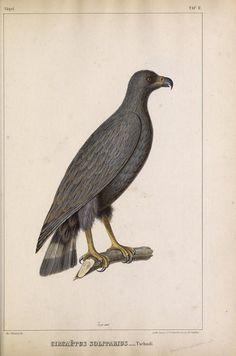 Untersuchungen über die Fauna Peruana. - Biodiversity Heritage Library