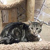 Pet Card With Images Animal Welfare League Pets Cat Adoption