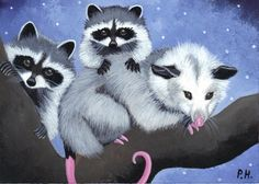aceo print opossum raccoon by WoundedTreeGallery on Etsy