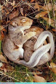 baby squirrels. awe.  this is how we cuddle.  #Fashion #AnnHeartsFashion