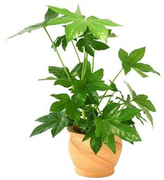 18 best large indoor plants for home