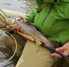 Tenkara, simple fly fishing method from Japan, uses only a telescopic tenkara rod, tenkara line and tenkara fly: Index