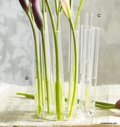 Roost Arc & Circle Vases