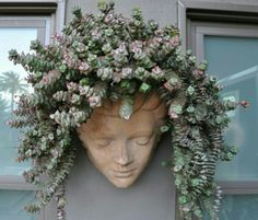 A Creative Planter!