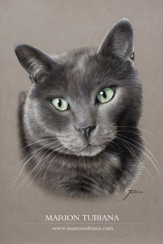 Little Mermaid Drawings, Paint Your Pet, Cat Sketch, Photo Chat, Animal Sketches, Pastel Art, Cat Drawing, Wildlife Art, Prismacolor