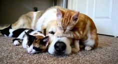 cats and dogs livin' together