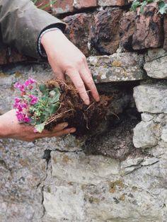 kiviaitaan koloja kasveille