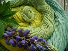 Dyed with lupin flowers and peduncle