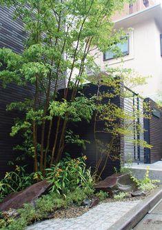 山をイメージした景石とヒメシャラの株立ちが外観を鮮やかに色づける Zen, Landscape Architecture Design, Contemporary Garden, Bouldering, Shrubs, Patio, Japanese, Stone, Plants