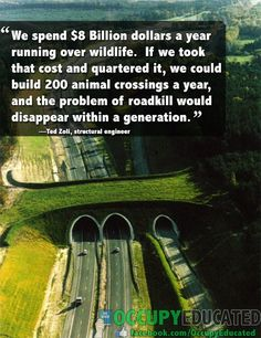 There are hundreds of wildlife crossings in Europe, and studies have shown they can reduce roadkill by as much as 90-100%. Who would like to see more of this in North America?