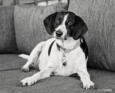 Family portrait photography including a collection of dogs! Shot on location at home in Pretoria. Fun Family Portraits, Family Portrait Photography, Dog Portraits, Dog Photography, Pretoria, Take A Nap, I Love Dogs, Black And White Photography, Monochrome