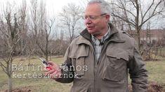 TIPP: Így kell megélesíteni a kerti metszőollót tavasszal Military Jacket, Garden, Military Field Jacket, Lawn And Garden, Military Jackets, Gardens, Outdoor, Home Landscaping, Tuin