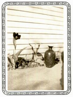 Vintage Photo..Flower and Vase Still Life, 1930's Original Found Photo, Vernacular Photography by iloveyoumorephotos on Etsy