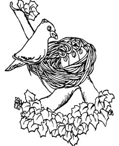 Sparrow Bird Winter Animal Coloring Pages Nature Free Online And Printable