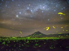 "Photograph by Steed Yu, National Geographic Your Shot  Constellations in the southern Milky Way compete with an earthly display of light near Tanzania's Lake Natron. ""These glowing elves were flying up and down among the lush grass on both sides of a ravine stream, like a flowing 'firefly way'—as if to contest ... the Milky Way,"" writes Your Shot member Steed Yu."