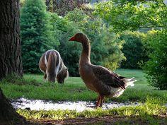 búcsúhétvége Bird, Pets, Animals, Animales, Animaux, Birds, Animal Memes, Animal, Animais