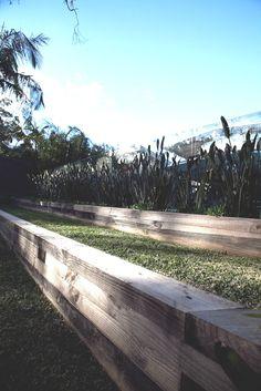 Strelitzia juncea in planter bed. Timber sleeper retaining wall. Palm Beach, NSW Australia Anthony Wyer + Associates www.anthonywyer.com
