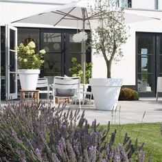 I love the white outdoor pots Outdoor Plants, Outdoor Spaces, Outdoor Gardens, Garden Deco, Terrace Garden, Outdoor Lounge, Outdoor Living, Patio Chico, Dream Garden