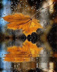 Elegia - My Desktop Nexus on imgfave Autumn Rain, Autumn Nature, Autumn Trees, Autumn Leaves, Rainy Wallpaper, Fall Wallpaper, Wallpaper Backgrounds, Moonlight Photography, Autumn Photography