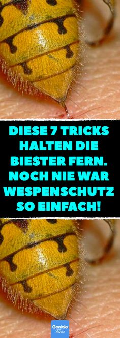 Noch nie war Wespenschutz so einfach! These 7 tricks keep the beasts away. Wasp protection has never been so easy! 7 tricks to get rid of annoying wasps. Diy Cleaning Products, Cleaning Hacks, Wasp, Life Motivation, Kids And Parenting, Good To Know, Gardening Tips, Blog, Google