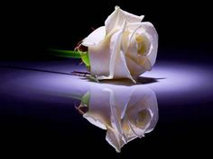 Image of Rose for Mom in Heaven - Google Search