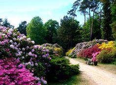 #Rhododendronpark in Graal-Müritz, Mecklenburg-Vorpommern; Anreise ab Rostock, Übernachtungen zu Ostern ab 50€/Nacht/Zimmer; Foto: Nikater, Lizenz: CC-BY-SA-3.0 (http://creativecommons.org/licenses/by-sa/3.0/), Buchung: http://www.easyvoyage.de/hotels/rostock/gaestehaus-rostock-luetten-klein-251644