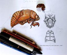 Scientific Illustration Cicada, Chicharra by Daviddleonluis on deviantART