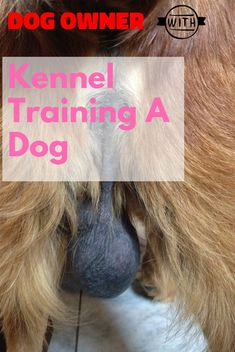 Kennel training is useful with youthful dogs and also older puppies with stress and anxiety issues. The greatest goal regarding crate exercising is trying to keep your dog away from harms approach. Kennel Training A Dog, Crate Training, Dog Training Tips, Stress And Anxiety, Take Care Of Yourself, Dog Owners, Your Pet, Stuff To Do, Have Fun
