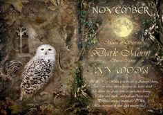 November / Ivy Moon - The Wheel of the Year  Celtic Photography UK