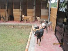 """""""The Saddest Blog I've Ever Written"""" - http://bit.ly/KM6FGx   I am praying for a miracle for Amazon CARES. Please send me your good thoughts, as today I am heartbroken. Just like or share this post, please. I will do EVERYTHING possible to keep CARES alive. The Peru Director has suggested closing the shelter, but not the charity. It will take time to sell our land there. I expect the June veterinary volunteer trip will continue as scheduled."""