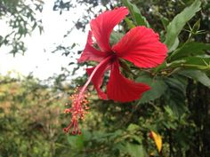 Flor roja _ Sebastián